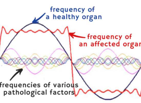 frequency of organs